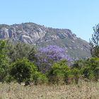 Manyara Nationalpark - Tansania (3)