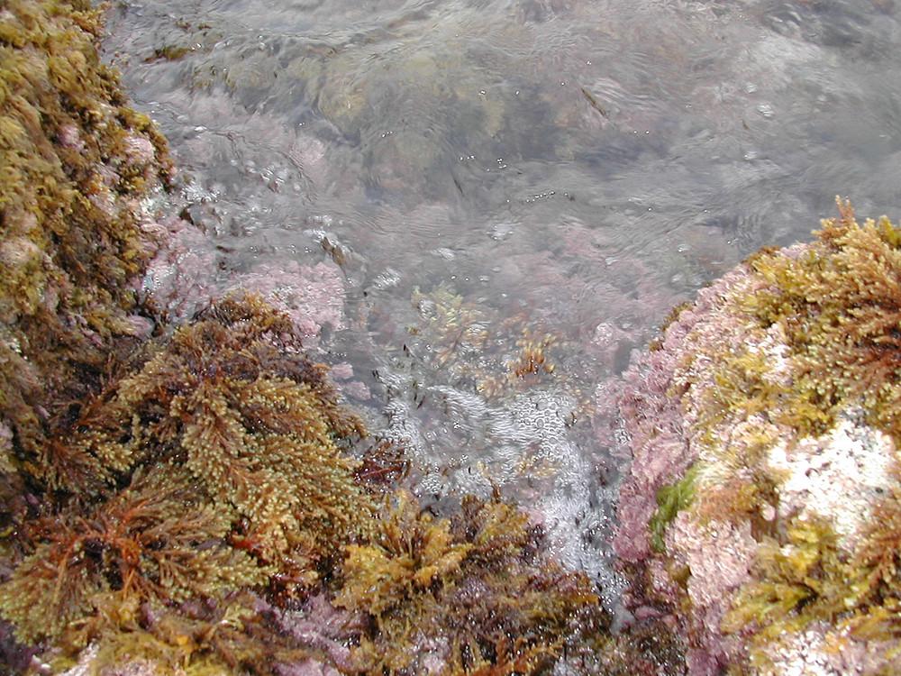 Mar natura viva