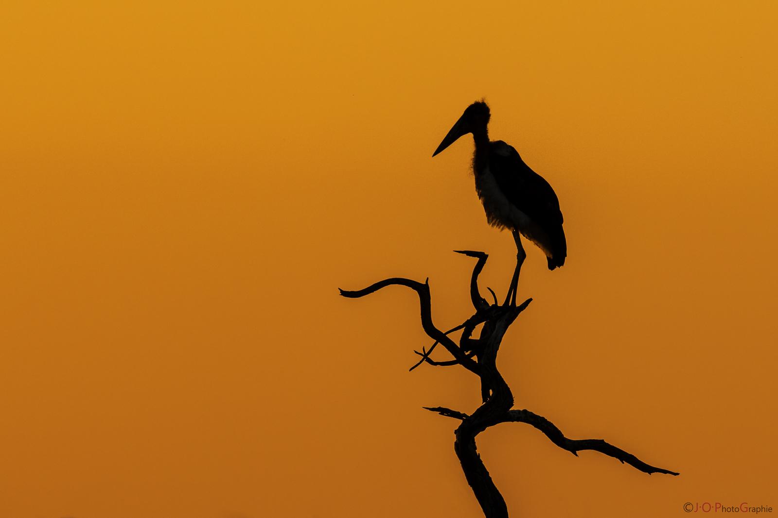 Marabu Sunset