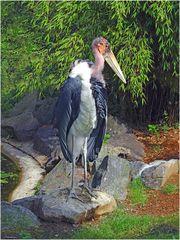 Marabu (Zoo Neuwied)