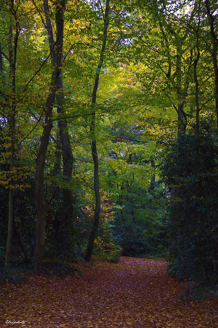 Marcher sur les feuilles mortes