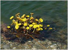 ...Marchfelder Frühlingsimpressionen.....