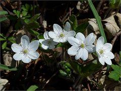 ...Marchfelder Frühlingsimpressionen.....(2)...