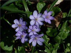 ...Marchfelder Frühlingsimpressionen.....(3)...