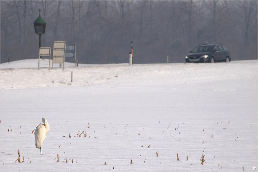 marchfelder winteridylle