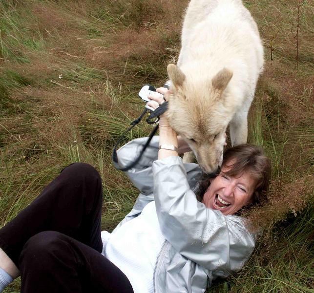 Marens Überlebenskampf mit dem Polarwolf !!!