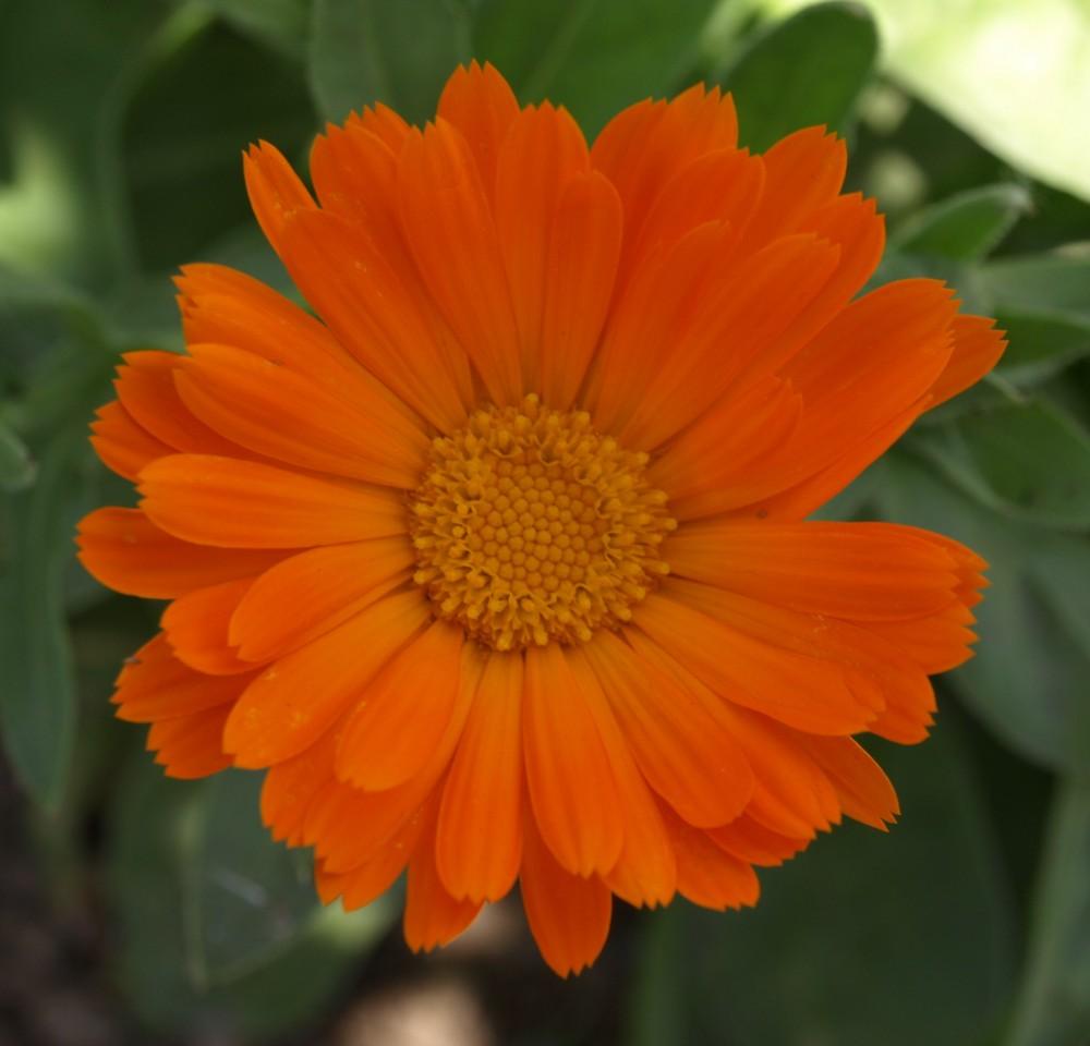 Margarita naranja...
