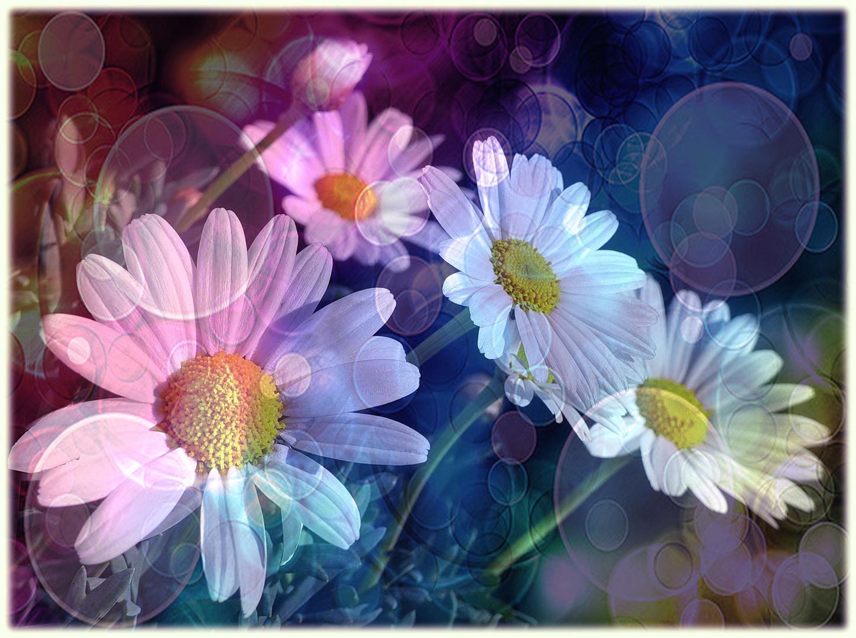 Margaritas En Apogeo Foto Bild Fotos Difusas Nature Blüten