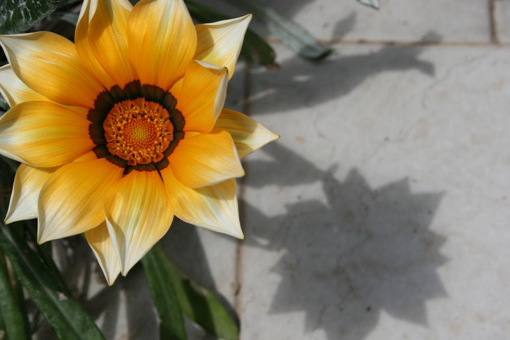 ...MARGHE(il fiore)...RITA(l'ombra)