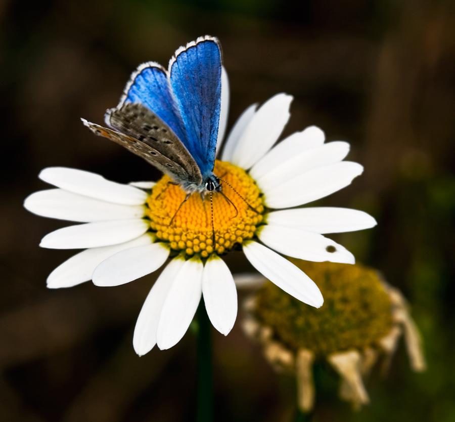 Margherita e la farfalla