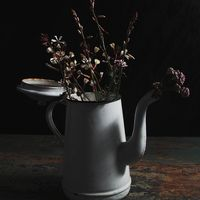 Maria Muñoz Still Life Photography