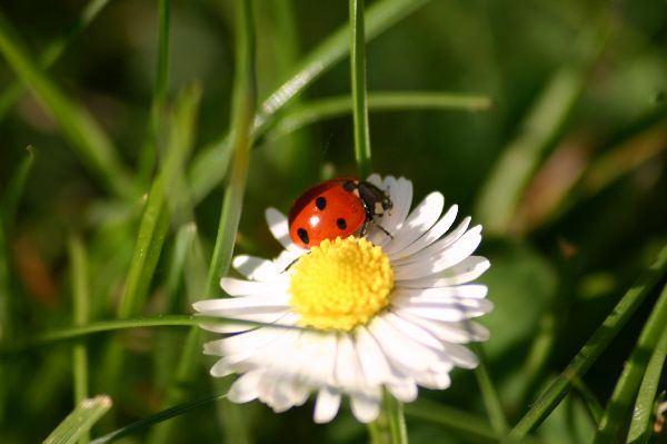 Marienkäfer Auf Blume Foto Bild Tiere Wildlife Insekten Bilder