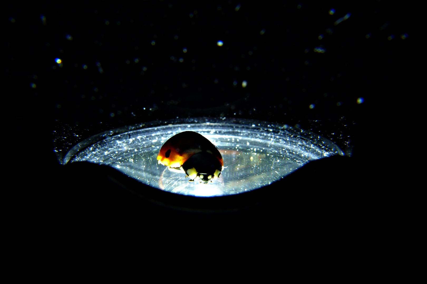 Marienkäfer aufm Taschenlampe