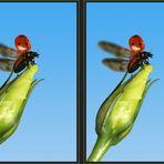 Marienkäfer flieg [3D]*