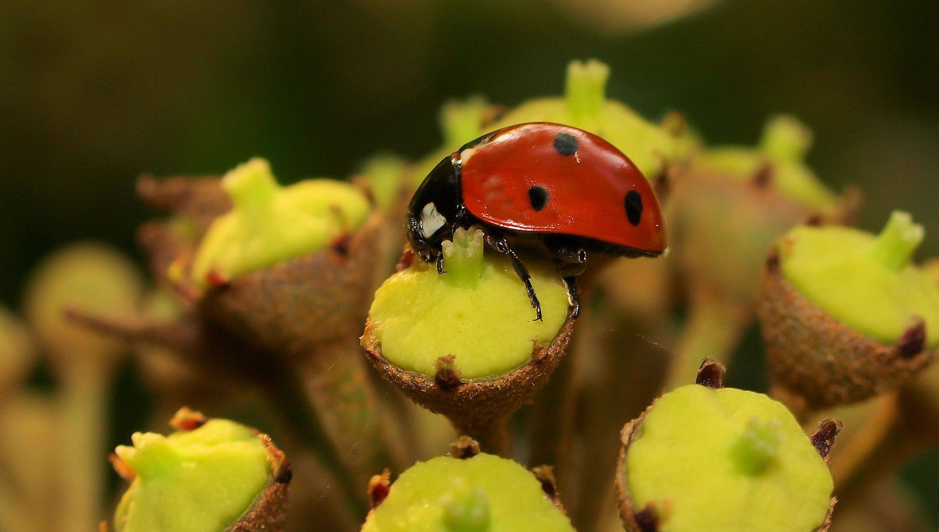 Marienkäferchen