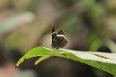 Mariposa 12
