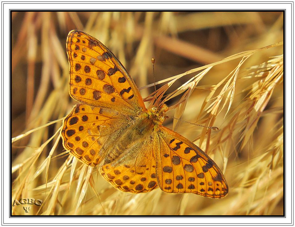 Mariposa al sol
