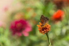 Mariposa solitaria