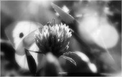 mariposa soplada por el viento