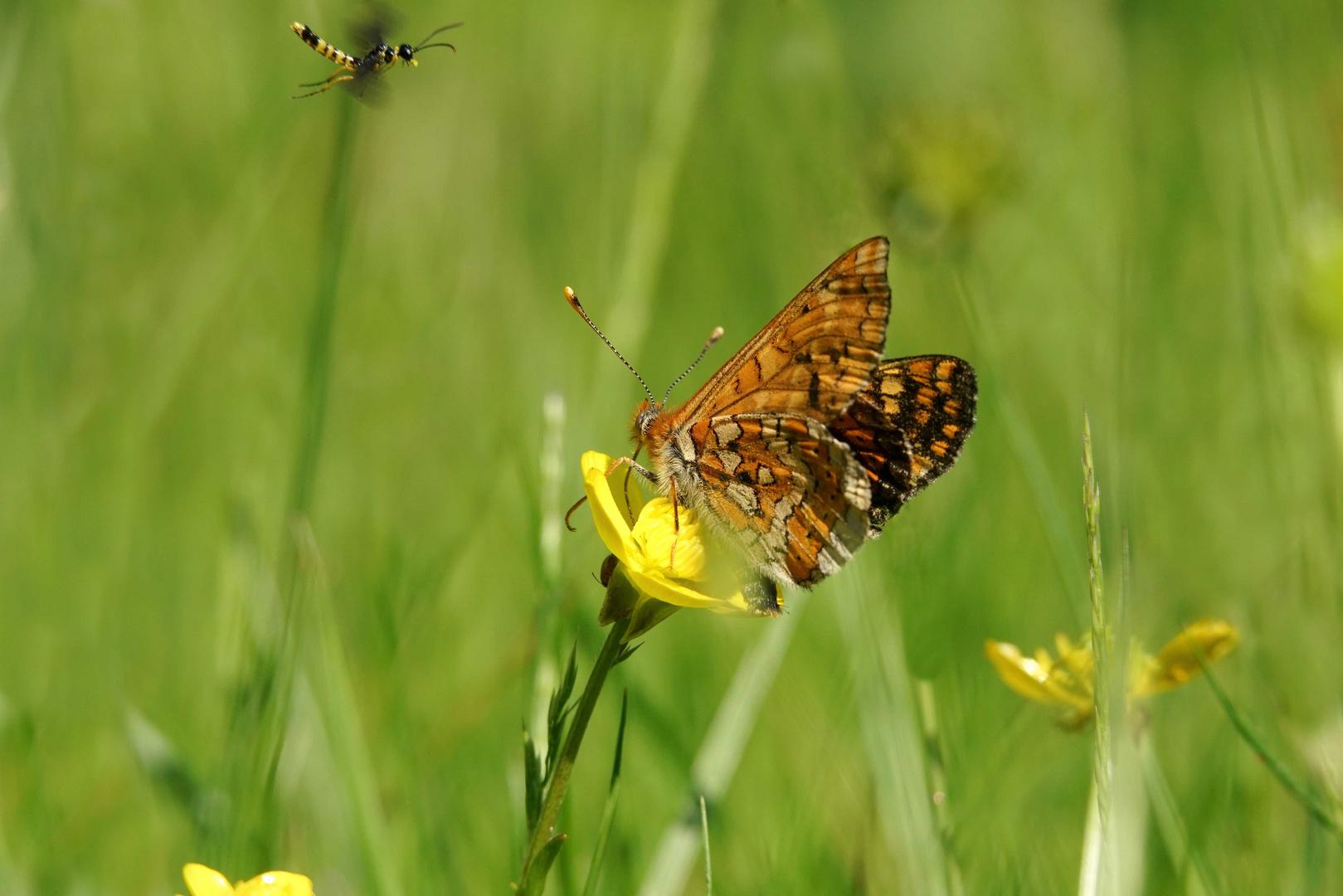 Mariposa y pequeña compañía