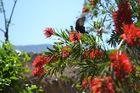 Mariposas En Buthan