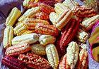 Markt in Pisac, Mais