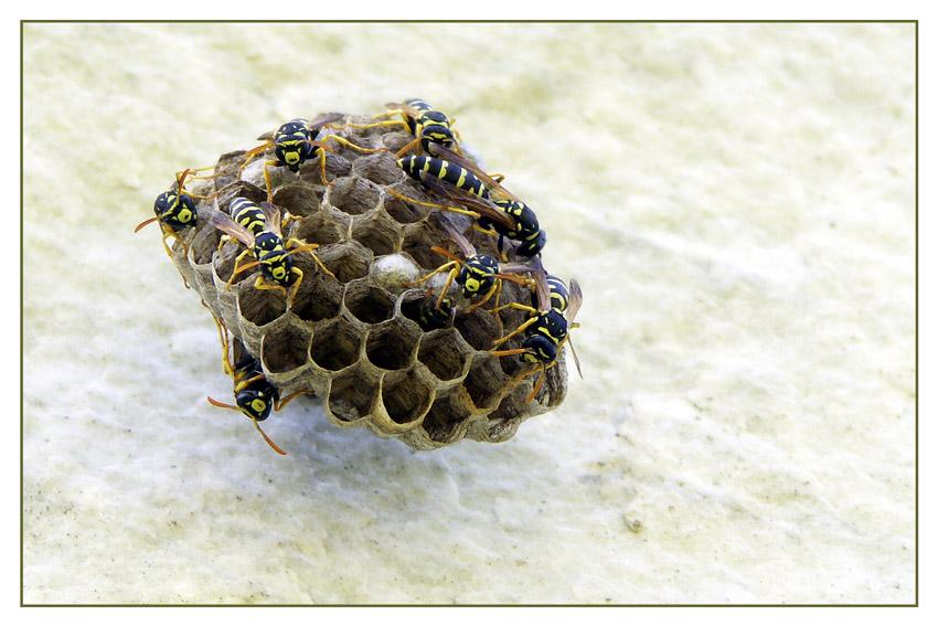 Marmor ist biologisch be- und abbaubar!
