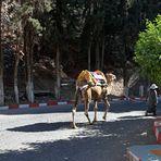 Marokko Menschen + Tiere -1-