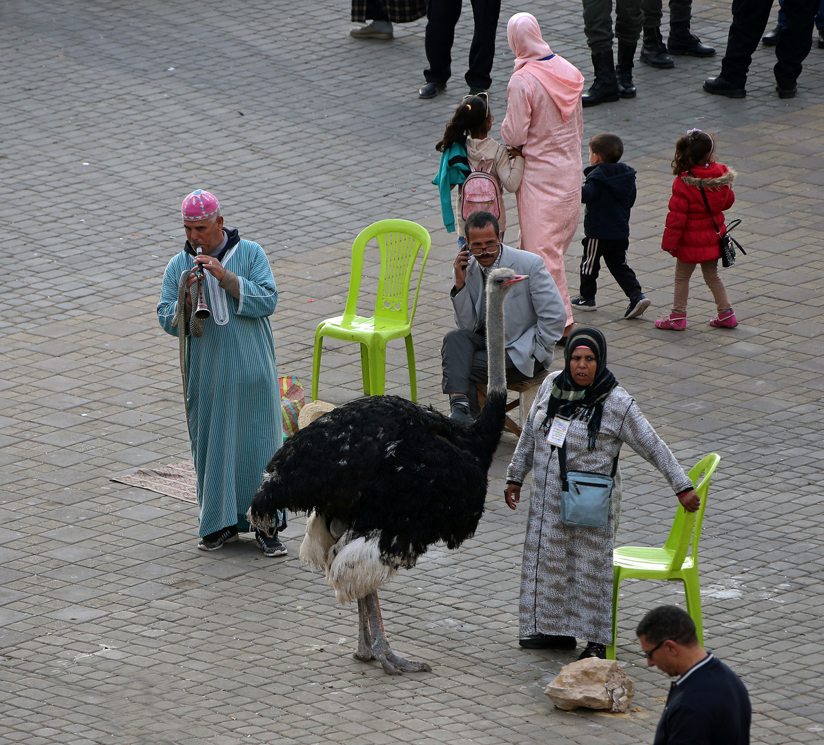 Marokko Menschen + Tiere -3-