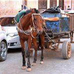 Marokko Menschen + Tiere -6-