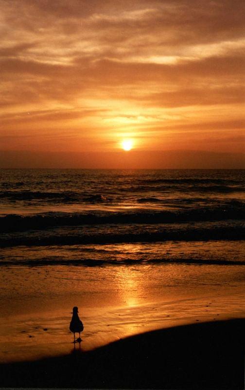Maroochy Beach Sunrise QLD Australia