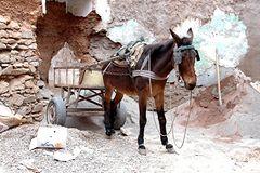 Marrakech . Baustellenfahrzeug