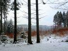 Marscheider Wald in Wuppertal