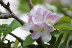 mas indicios de la primavera
