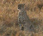 Masai Mara 2016 - -in den frühen Morgenstunden -