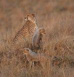 Masai Mara 2016 – Malaika mit Ihren Babys – Bild 1