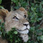 Masai Mara 2016 – so verträumt