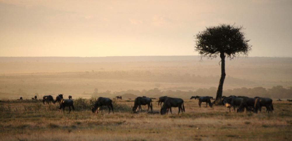 Masai Mara am Abend