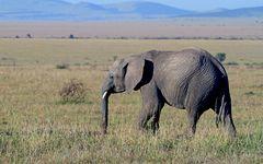 Masai Mara II