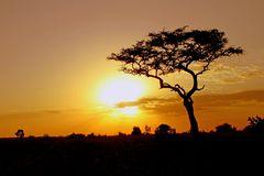 Masai Mara IX