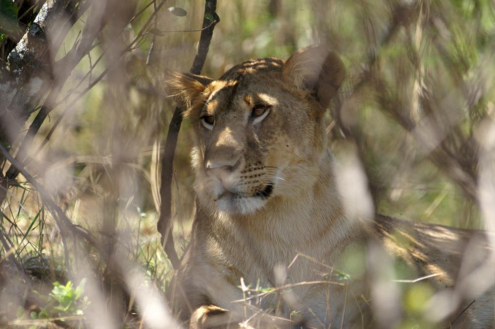 Masai Mara Kenia