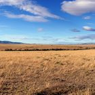 Masai Mara ~ Landscape