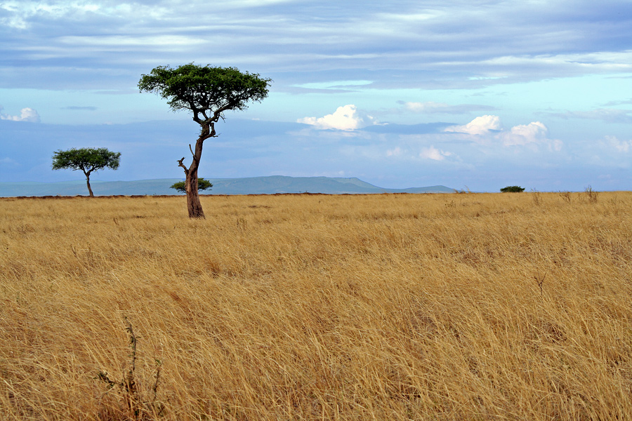 Masai Mara ~ Landscape #3