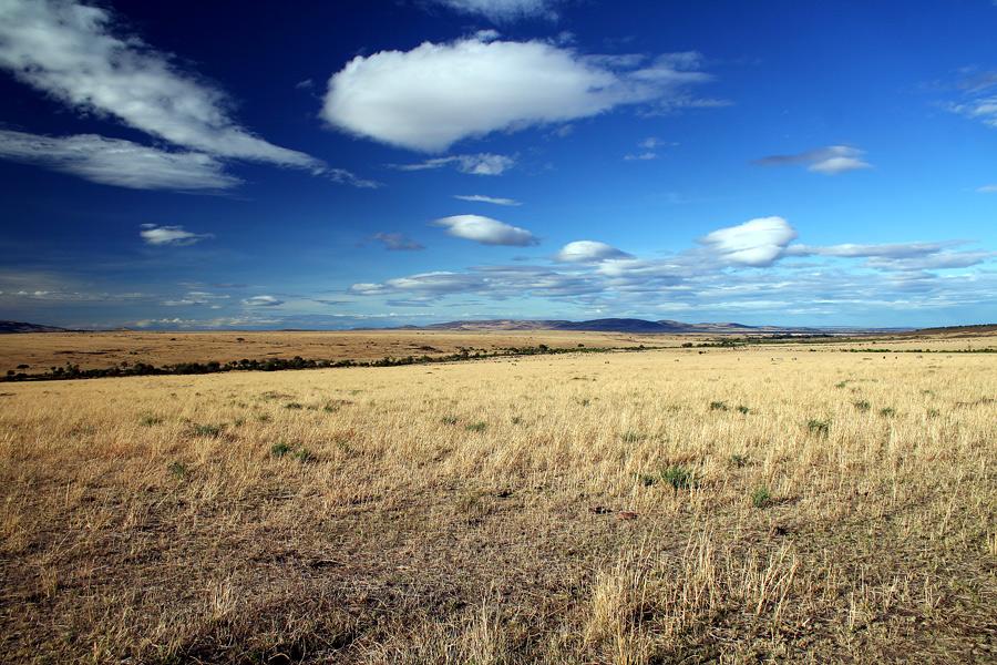 Masai Mara ~ Landscape #4