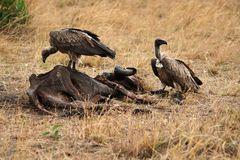 Masai Mara ~ Lunchtime
