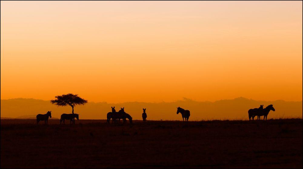Masai Mara Morning