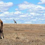 Masai Mara ~ *Schwips*
