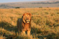Masai Mara September 2020