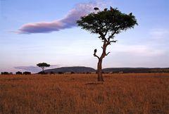 Masai Mara ~ Waiting for Dinner