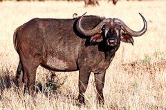 Masai Mara ~ Whats Up?!